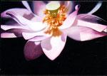 「光がゆれた」(下)/ 162×162㎝ / アクリル、パネル/ 2007