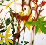 「木の実と葉っぱのコンポジションⅡ」/65×65㎝/アクリル、パネル、綿布
