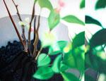 「水鏡〜緑の音〜」/10P/ アクリル、パネル、綿布