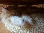 Katz ist das schööööön.....