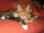 Siamesische Zwillinge :-))))))))