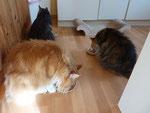 Hier ging es Los,lecker Frühstück...Lachs mit Karotte....