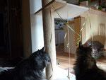 Schmückten mir meinen eigenen Luftschlangenbaum....*freu*freu*.....