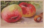 TSN 1653 [pommes et noisettes]