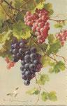 STZF 1289 [grappes de raisin et papillon blanc]