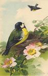 Jounok 232 [mésange près d'un nid, 1 autre volant]