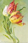 STZF Déposé 1146 [1 tulipe blanche et 2 rouges-jaunes]