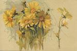 PFB 1889 2103 [marguerites jaunes]