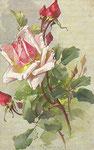 Tuck 881 [rose rose avec boutons]