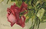 DIV - Davidson Bros 7085 1 rose rouge, 1 bouton rouge, bord d'une autre rose