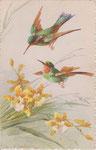 STZF 1276 2 colibris avec orchidées