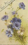 STZF 1262 [bleuets]