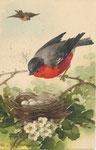 Jounok 232 [rouge-gorge sur branche près d'un nid, 1 autre volant]