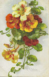 GOM 1940 [capucines rouges, jaunes et blanche]
