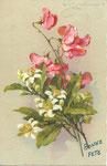STZF 502 [edelweiss et pois de senteur roses]