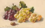Jounok 235 [grappes de raisins blanc et noir, 1 noisette]