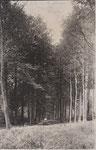 Anonyme   Photo carte avec légende manuscrite Park in Moulbaix ... 1917
