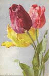 STZF 1115 [tulipes jaune, rouge et rose]