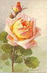 STZF 1267 [rose abricot avec bouton]