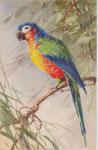 STZF 1286 [ara vert, bleu, rouge-orange]