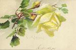 PFB 1882 Gruppe 9. [1 rose jaune, 1 bouton jaunes]