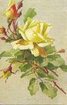 Tuck 881 [rose jaune avec boutons]