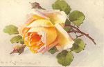 STZF 1272 [rose abricot - horizontal]