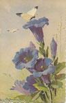 STZF 1242 [papillon blanc avec gentianes]