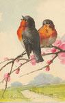 Jounok 234 [2 rouges-gorge à droite sur branche fleurie]