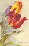 STZF 1113 [3 tulipes rouge, jaune et bleue]