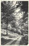 Amougies NELS - Dumazy Amougies   Chemin sous bois, de la Salrière à l'auberge ...