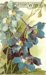 Tuck 6922 [5-6 delphiniums bleus]