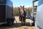 :) entspanntes Pferd