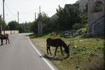 Endlich mal griechische Esel. Er will aber nicht auf die Seite.