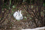 Kaninchen auf dem Eurocamping