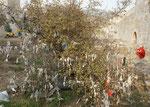 """Der Wunschbaum etwas lädiert, Ich bekomme einige Baumsamen als Talisman."""" Bringen Glück"""""""