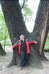 riesige Bäume