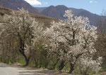 Der Frühling zeigt sich in seiner vollen Pracht