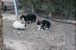 Insgesamt sind es 7 junge Kätzchen