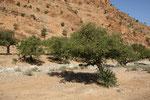 Araganbäume so weit das Auge reicht, aber keine Ziegen darauf