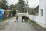 Bei uns gehen die alten Herren mit den Hunden spazieren. In der Türkei haben wir noch selten mal jemanden mit Hund spazieren sehen, dafür öfters mit Kühen oder Schafen