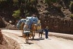 Zum ersten Mal in diesem Jahr sehen wir Kamele die Lasten tragen