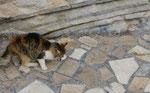 .....aber vorallem Glück für die Katze