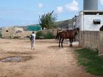 Nahe der Golden Bay liegt eine Pferdehof, wo mein Frauchen vorher telefonisch einen Reitausflug gebucht hat.