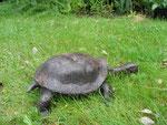 tortue en bronze, dans un jardin de la Somme en Picardie
