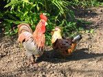 coq et poule en tôle laquée, dans un jardin de la Somme en Picardie