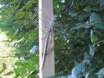 libellule en fil de maillechort, dans un jardin de la Somme en Picardie