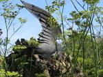 corbeau en tôle découpée, dans un jardin de la Somme en Picardie