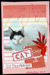 Received from Katerina Nikoltsou - Greece on 22-08-2011 CATplus 02