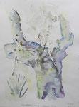 algorobo-Baum, la xara (E),aquarell auf papier, 40x30 cm
